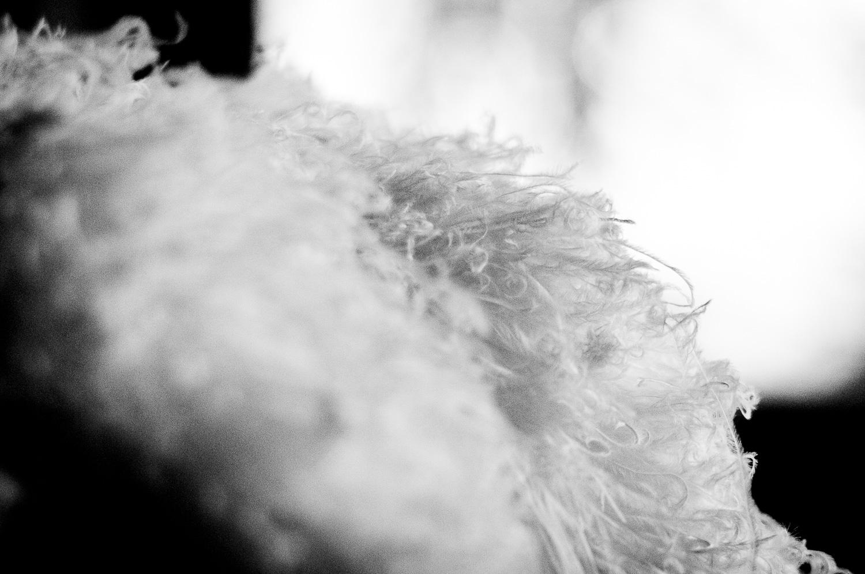 Mise au point sur l'une des plumes d'un chapeau de Gille