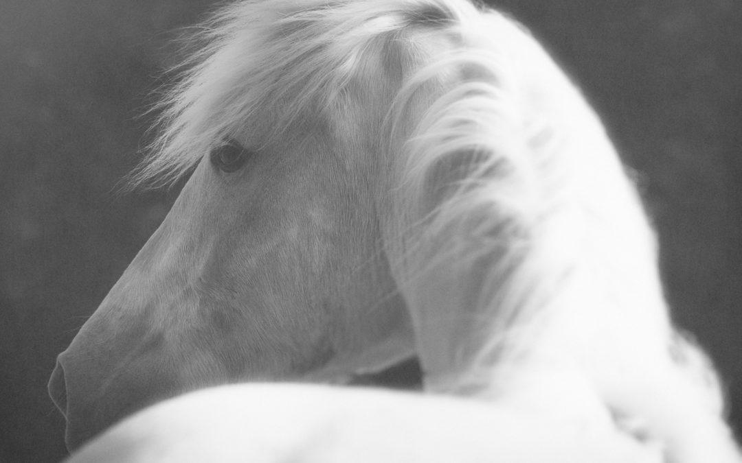 Le noir et blanc – 1 place disponible