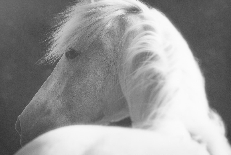 Photo d'un cheval en noir et blanc